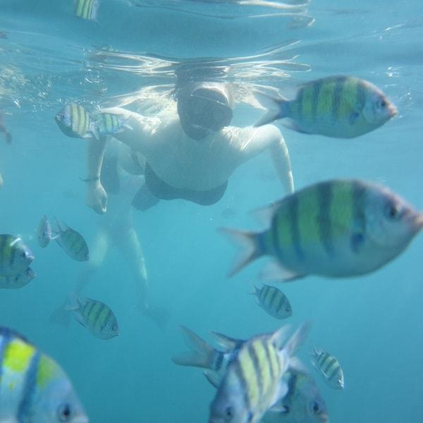 Phi Phi snorkeling