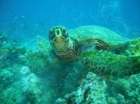 Discover Scuba Diving Similan