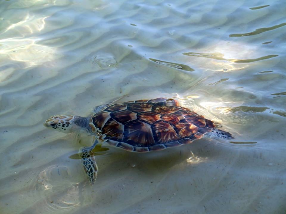 Turtle by the shore