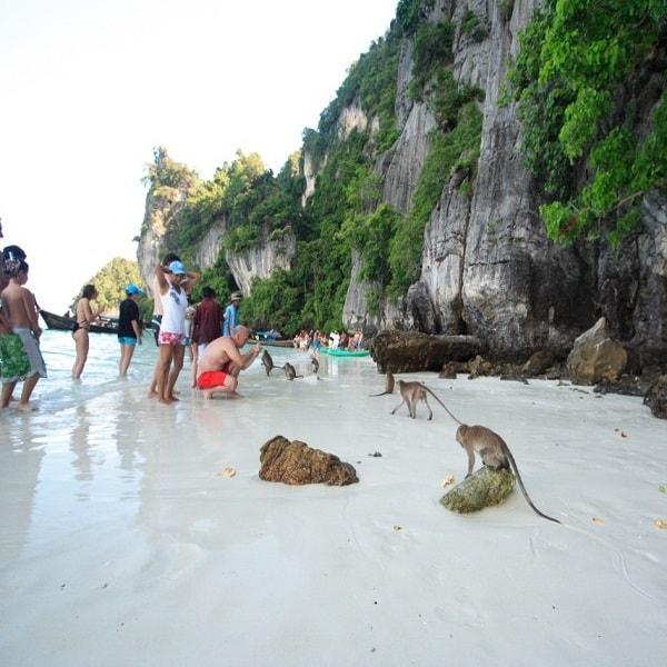 Phi Phi Beach: Snorkeling Thailand