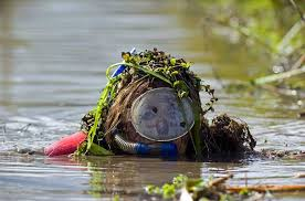 Bog snorkeling