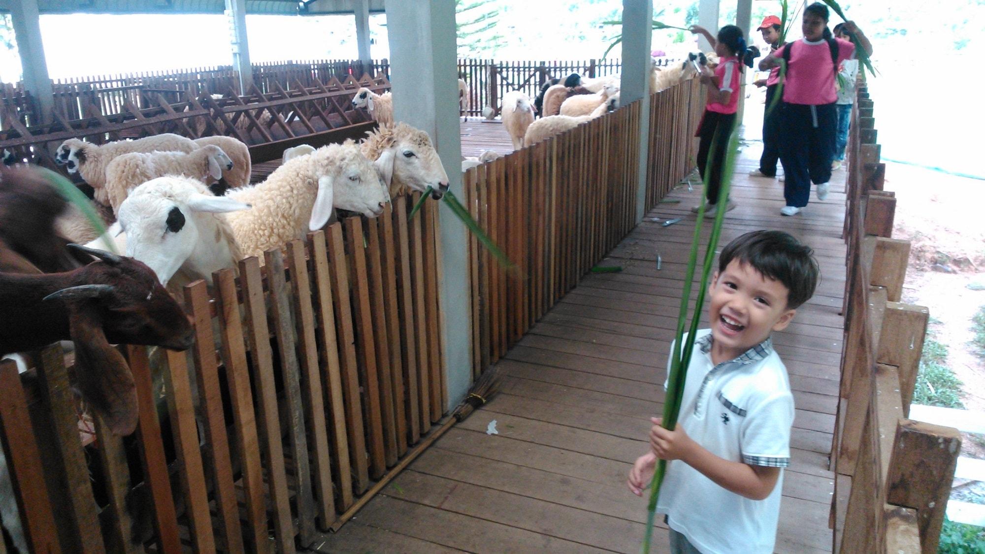 Dairy Hut Phang Nga