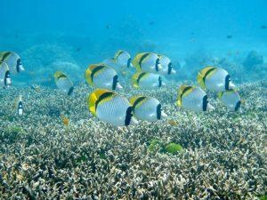 Racha Noi reef