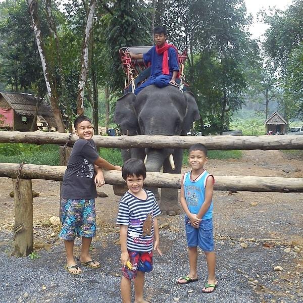 Elephant feeding Khao Lak