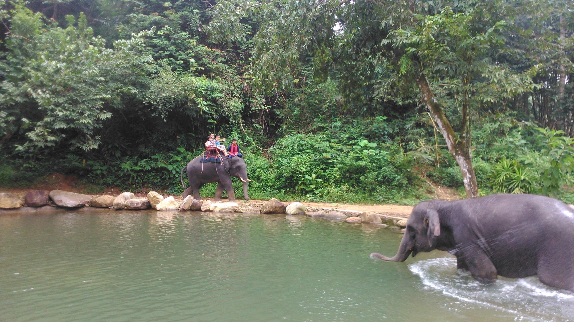 Phang Nga elephant camp