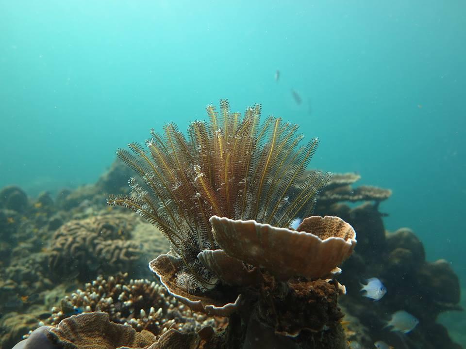 Phi Phi soft coral