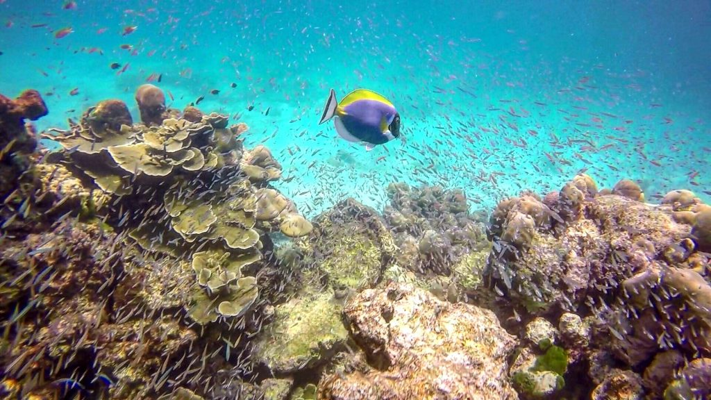 Surin Islands reef