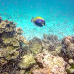 Surin Islands reef