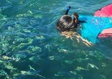 Snorkeling Koh Tan
