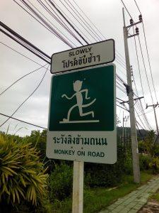 Koh Sirey Monkeys Phuket